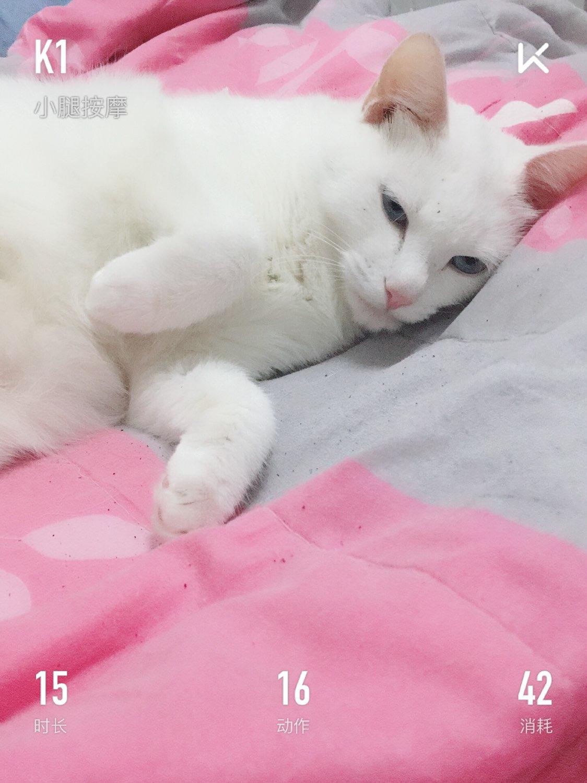 壁纸 动物 狗 狗狗 猫 猫咪 小猫 桌面 1124_1500 竖版 竖屏 手机